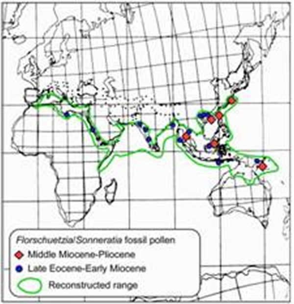 古生物地理分布