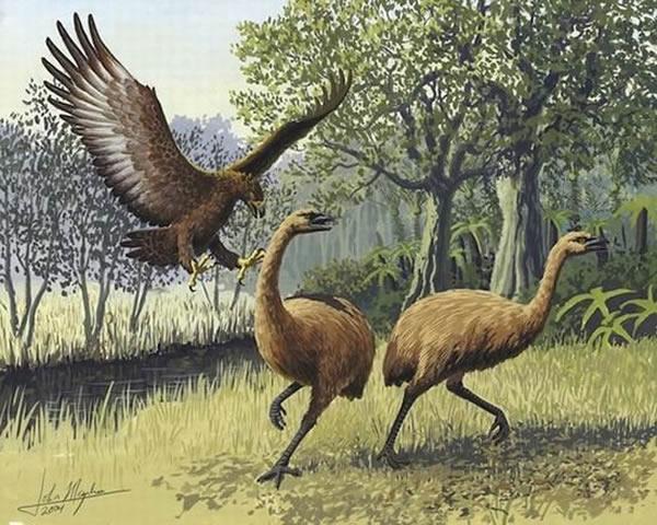 恐鸟粪便化石可分析它们灭绝前所进食的植物