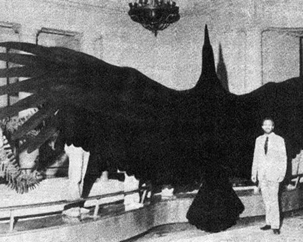 阿根廷巨鸟