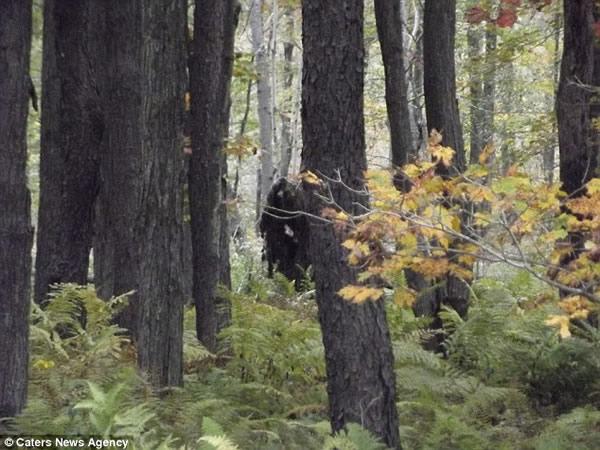 传说中的大脚怪再现美国树林
