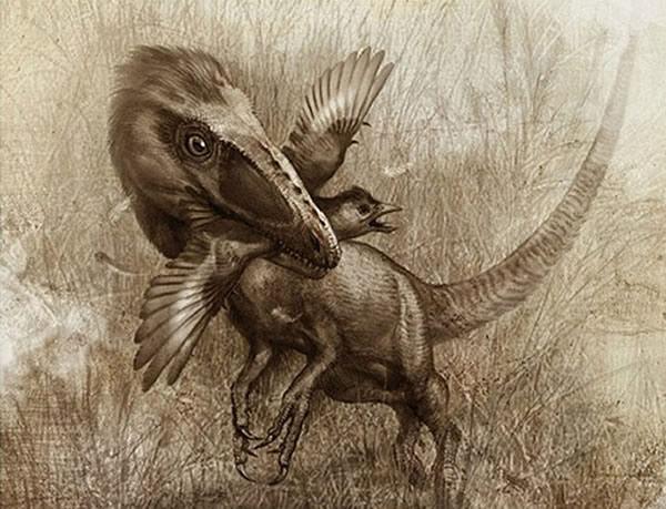 像狼一样的恐龙:中华美羽龙
