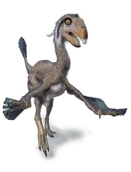 切齿龙(Incisivosaurus)
