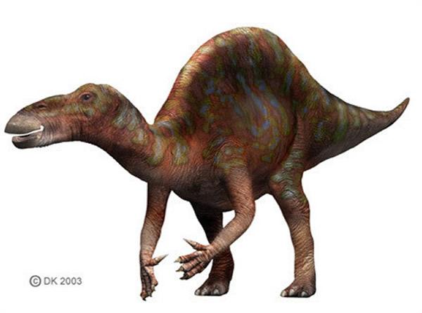 豪勇龙(Ouranosaurus)