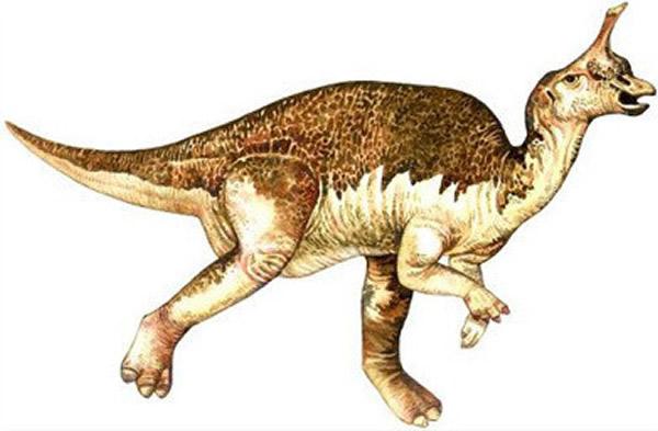 青岛龙(Tsintaosaurus)