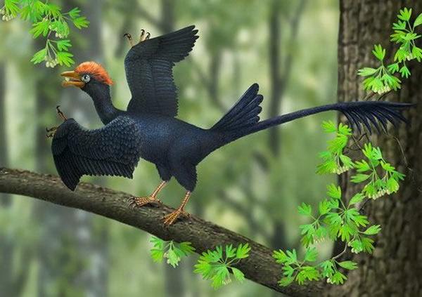 古生物学家最新研究发现1.2亿年前热河鸟长着两个尾巴