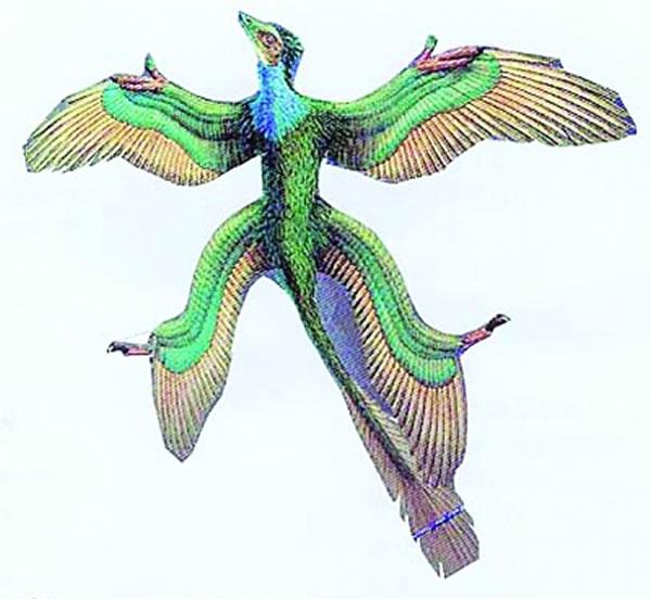 有四个翅膀的顾氏小盗龙复原图