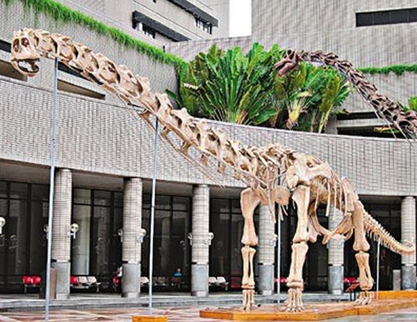 """香港将举行""""恐龙夜派对"""" 展出炳灵大夏巨龙"""