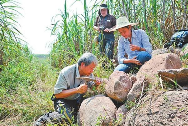 古生物学家在广西扶绥考察恐龙化石遗址