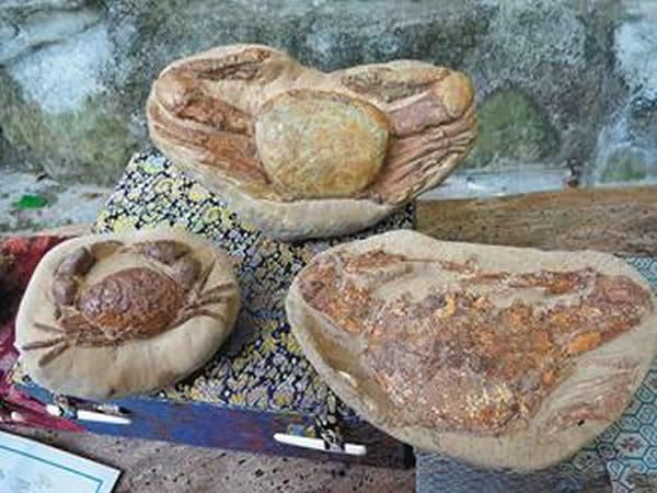 隆背、红星斗蟹和东方蟳是极少数可看到完整身形的珍稀化石