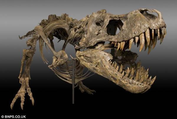 美国农民发现7000万年前的暴龙和三角龙化石一夜暴富