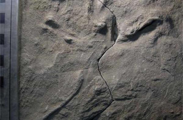 发现澳洲已知最古老鸟类足迹化石