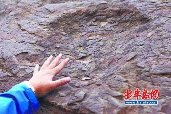 岩石上的恐龙足迹化石