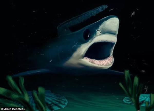 研究人员认为,最新发现的鲨鱼牙齿化石将有助于揭晓2.52亿年前史前鲨鱼如何幸存于物种大灭绝事件,当时地球80%物种灭绝消失。研究显示史前鲨鱼的牙齿较小,具有独特