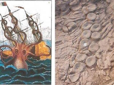 Kraken Theory Resurfaces With New 'Evidence'