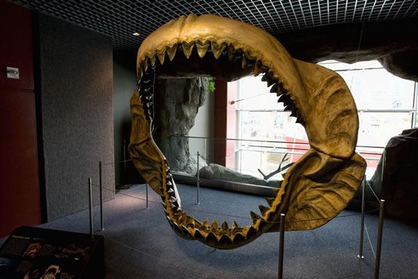 巨牙鲨可能因为体型庞大而更易灭绝