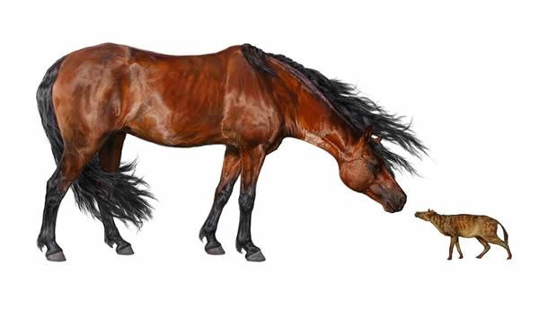 已知最早的始祖马与现代家马