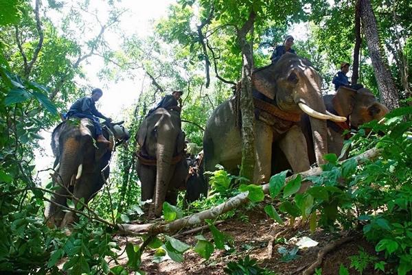 """在缅甸大约有5000头处于人类管辖下的大象,其中有2861头都属于一家名叫""""缅甸伐木公司(The Myanma Timeber Enterprise)""""的官方伐"""