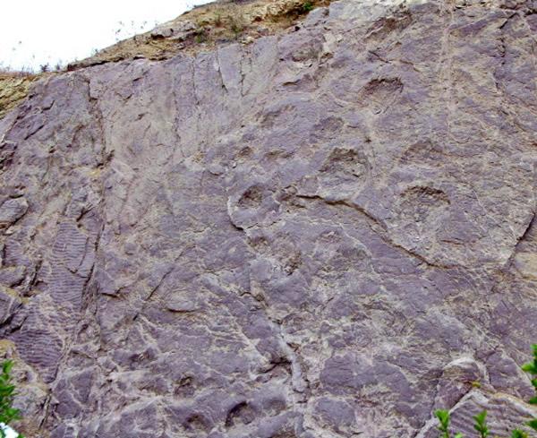 位于岌山省级地质公园内的恐龙足迹化石
