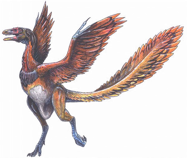 研究发现始祖鸟可能不会飞