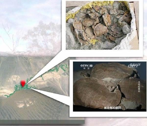新疆鄯善侏罗纪时期乌龟墓地