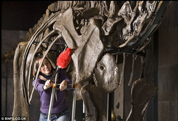 美国发现的完整梁龙骨架化石