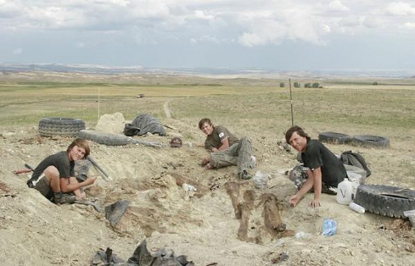 阿伯斯多弗尔和他的两个儿子正在现场发掘恐龙骨架。