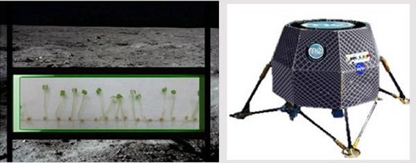 美国宇航局计划2015年前开始进行在月球上种植物的实验
