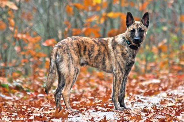 狗起源未解之谜:欧洲?中东?东亚?