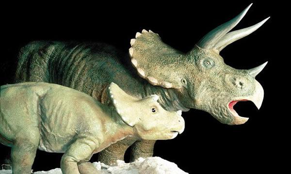 开角龙与三角龙是远亲关系,图为博物馆内三角龙模型