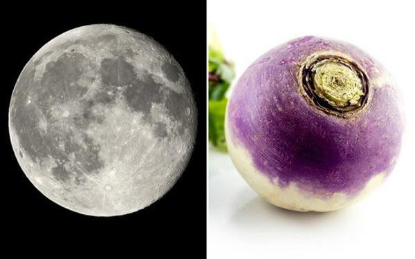 这个项目或有可能使宇航员尝试自己种植日常所需的食物