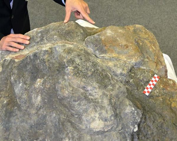 日本富山市发现甲龙足迹化石