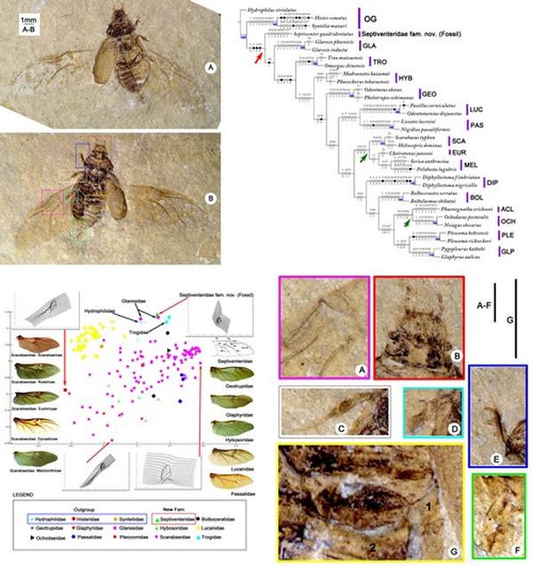 金龟子甲虫演化研究中取得新进展