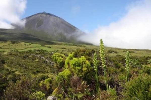 欧洲最稀有的兰花物种蝴蝶兰重现在亚速尔群岛一处火山脊上
