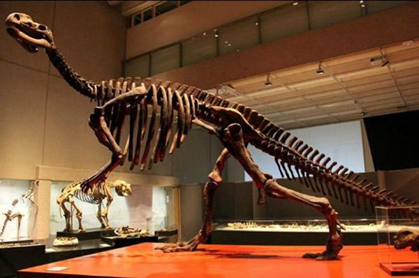 澳大利亚昆州博物馆展出百余件恐龙化石