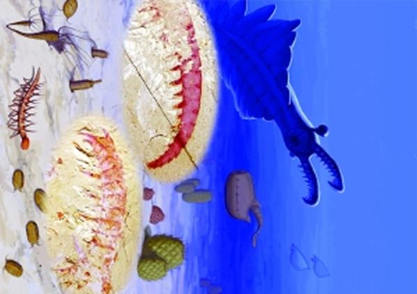 奇虾爪子化石很像虾尾