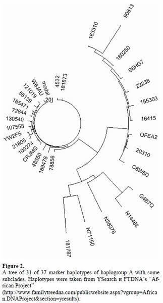 美国DNA谱系科学院认为人类并非起源于非洲