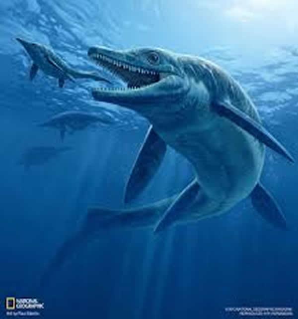 """1月 巨型鱼龙类""""海王鱼龙属(Thalattoarchon、タラットアルコン)""""被发现。"""