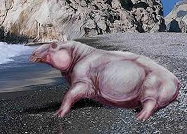"""4月 灭绝哺乳动物""""索齿兽属(デスモスチルス、Desmostylus)""""是游泳高手!?"""