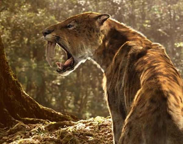7月 剑齿虎亚科(サーベルタイガ、Machairodontinae)的下颌的力量弱!?