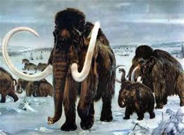 "9月 猛犸象属(Mammuthus、マンモス)灭绝的主要原因是人类的""过度捕杀(オバーキル、Overkil)""而不是""气候变化"""