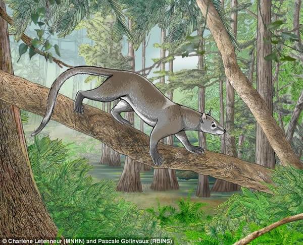 比利时5500万年前树栖哺乳动物化石揭示猫狗共同祖先