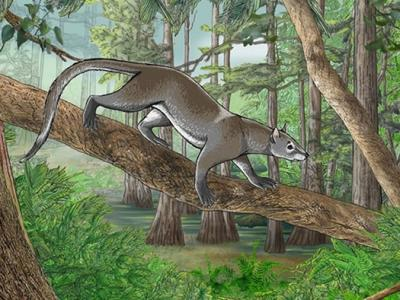 Tiny Ancestor of All Modern Carnivores Found