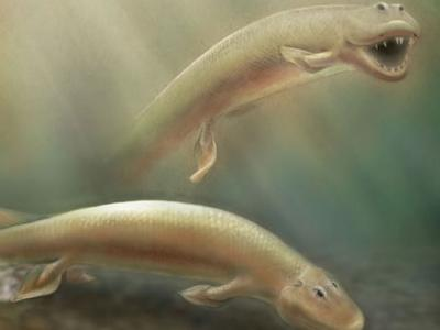 'Fishimal' Was Part Fish, Part Limbed Animal