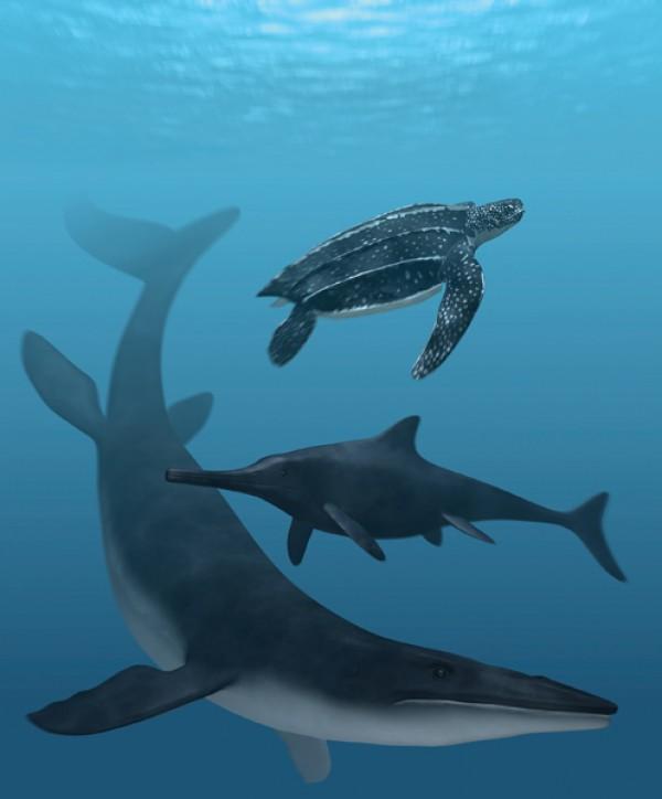 棱皮海龟、鱼龙和沧龙身上的配色方案与现代海洋生物非常类似
