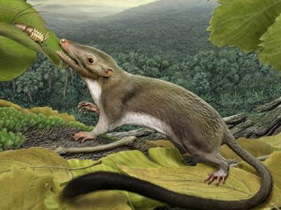 Ancestor of Humans Lived With Dinosaurs
