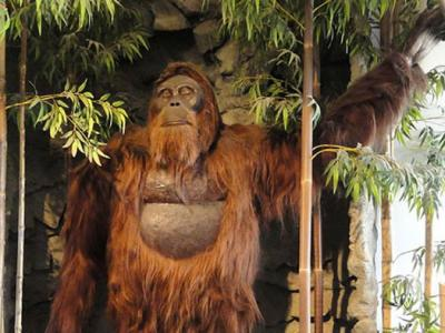 Did Cavities Kill Earth's Largest Ape?