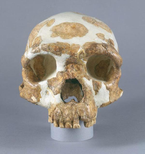 金牛山人头骨化石