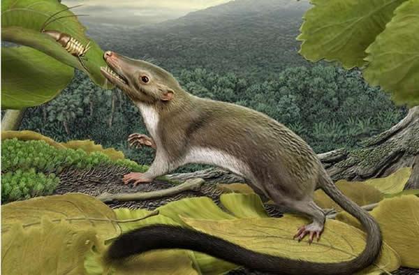 艺术家描绘最早的胎盘哺乳动物,与恐龙生活同一时期,是人类进化始祖物种。
