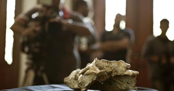 Sahitisuchus fluminensis的化石的新闻发布会