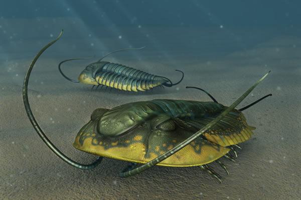 绝大部分三叶虫在温暖的浅海地带过着底栖生活